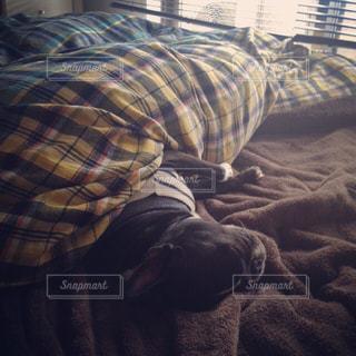 ベッドの上で眠っている人の写真・画像素材[977373]
