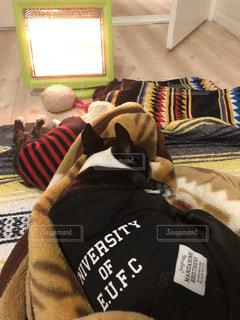 毛布の上に横になっている猫の写真・画像素材[977374]