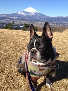 草の中に座っている犬の写真・画像素材[977375]