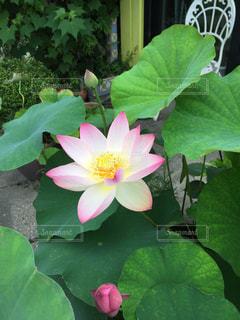 近くの花のアップ - No.863207