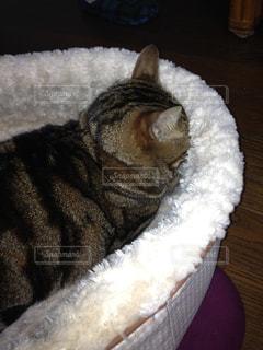 ベッドの上で眠っている猫の写真・画像素材[873611]