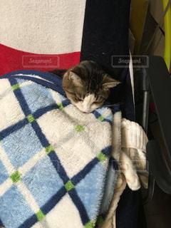 毛布にくるまる猫の写真・画像素材[871133]