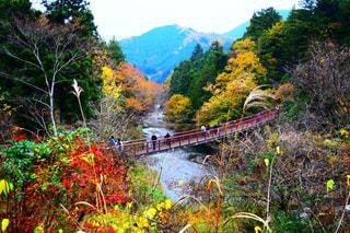 森の川に架かる橋の写真・画像素材[863798]