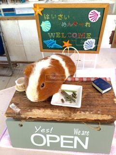 テーブルの上に座って齧歯動物の写真・画像素材[895464]