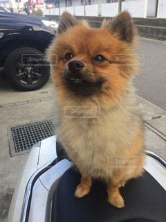 車の中に座っている犬 - No.974337