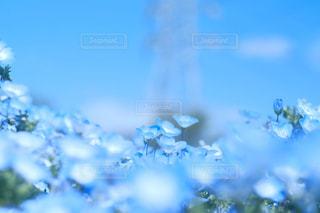 花の写真・画像素材[2032872]