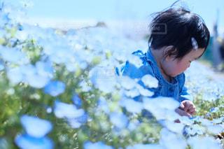 花の写真・画像素材[2032888]