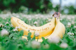 屋外,メッセージ,シロツメクサ,草木,バナナ
