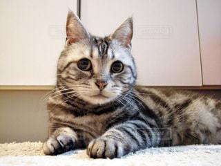ベッドの上で横になっている猫 - No.871045