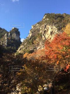 山と木々の写真・画像素材[865782]