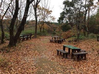 公園のベンチの写真・画像素材[873702]