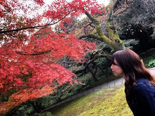 木の隣に立っている女性の写真・画像素材[866222]