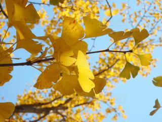 ツリーに黄色い花の写真・画像素材[866225]