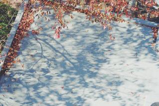 地面の雪の木の写真・画像素材[870859]