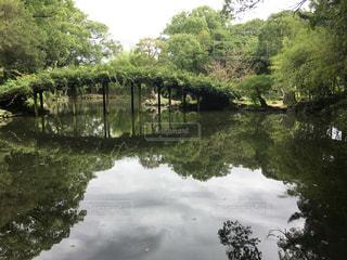 木々 に囲まれた水の体の写真・画像素材[866941]