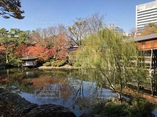 和歌山城内にある西の丸庭園の紅葉の写真・画像素材[893852]