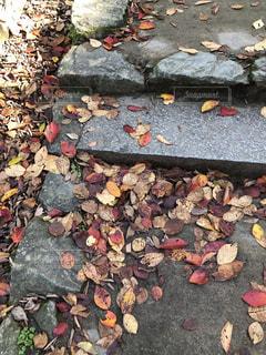 石段に積もった落ち葉の写真・画像素材[893857]