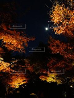 月と紅葉の写真・画像素材[869785]