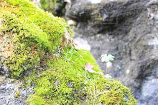 近くの岩のアップの写真・画像素材[885786]