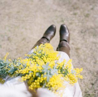 近くの花のアップの写真・画像素材[913349]