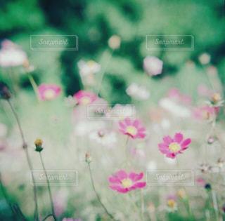 近くの花のアップの写真・画像素材[1455115]