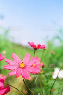 近くの花のアップの写真・画像素材[1455116]