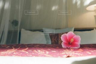 赤白とピンクの花の写真・画像素材[1455131]