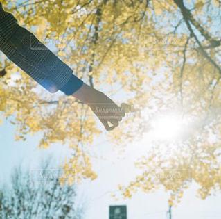 木の上に空気を通って飛んで男の写真・画像素材[1465369]