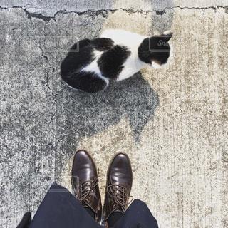 靴の上に座って黒い猫の写真・画像素材[1822601]