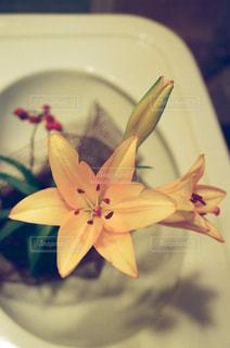 花,黄色,室内,flower,ゆり,yellow