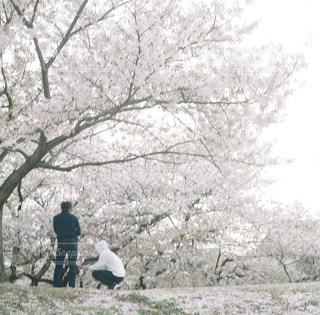 木の隣に立っている人のグループの写真・画像素材[1833146]