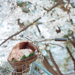 近くの花のアップの写真・画像素材[1885536]