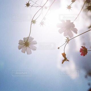 木の枝に花の花瓶の写真・画像素材[1897011]