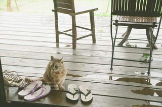 木製のテーブルの上に座っている猫の写真・画像素材[2878905]