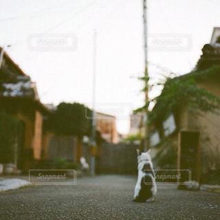通りのクローズアップの写真・画像素材[2917092]