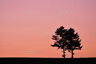 夕日の木の写真・画像素材[1393629]