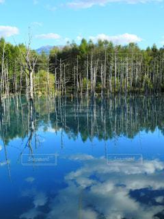 美瑛、青の池の写真・画像素材[1393656]