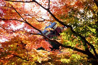 紅葉,カラフル,景色,鮮やか,樹木,たくさん,スポットライト,草木,フォトジェニック,カメラ男子