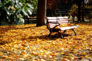 紅葉,屋外,カラフル,ベンチ,景色,鮮やか,樹木,たくさん,明るい,草木,フォトジェニック,カメラ男子