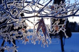 冬,雪,屋外,樹木,たくさん,明るい,景観,インスタ,フォトジェニック