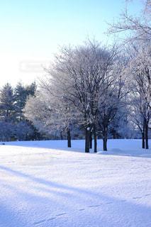 自然,空,冬,雪,屋外,景色,樹木,明るい,景観,インスタ,フォトジェニック