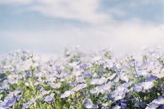 自然の写真・画像素材[1096872]