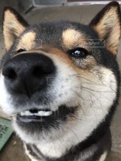 犬の写真・画像素材[33020]