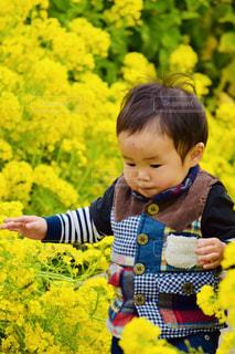 子ども,春,お花畑,屋外,黄色,お花見,ピクニック,人物,人,イエロー,男の子,菜の花畑,1歳,春の訪れ,きいろ,yellow,愛知牧場,お弁当持って,幸せの色