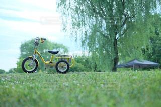 アウトドア,公園,緑,黄色,キャンプ,グリーン,休日,三輪車,休日の過ごし方