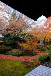 紅葉,京都,旅行,源光庵