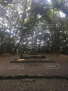 自然,神社,福岡,神聖な場所,宗像神社