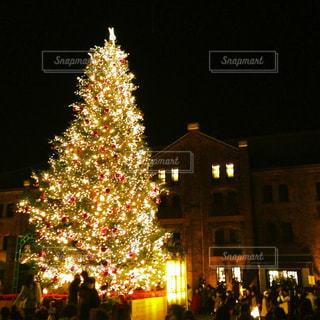 夜ライトアップされたクリスマス ツリーの写真・画像素材[925571]