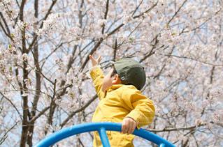 お花見•公園コーデの写真・画像素材[1132528]