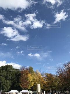 大きな木の写真・画像素材[875700]